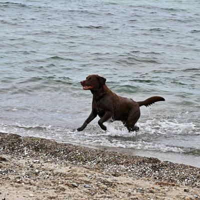 Trine liebt das Wasser,...