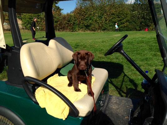 Gino beim Golfen