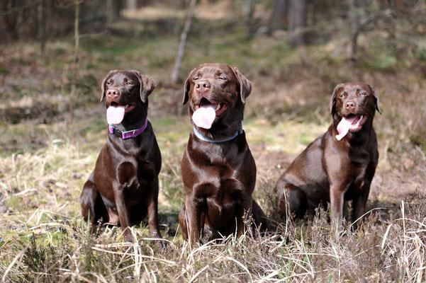 Trine, Skipper & Lea