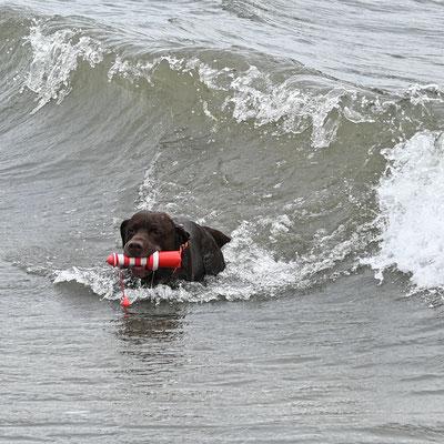 """Surfboy"" Skipper"