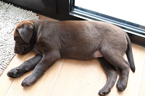 Tuula hundemüde