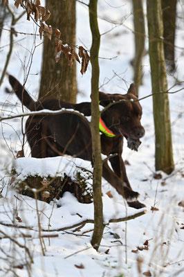 Dummy-Training im Wald bei Luttrum