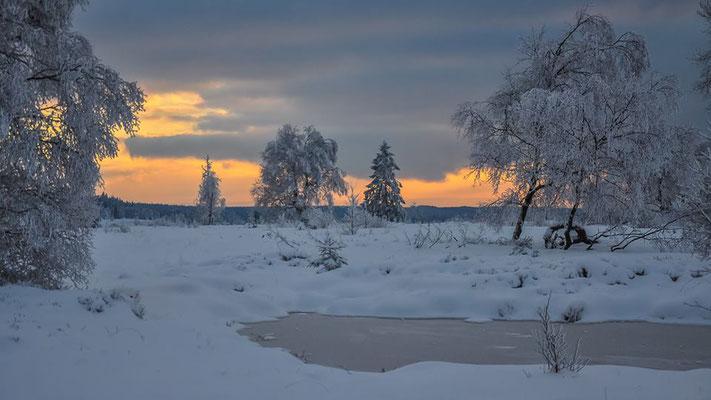 Les Fagnes en hiver, les steppes liégeoises, une invitation à la beauté et à l'aventure