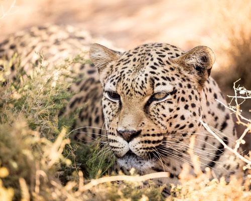Der 2-Augen-Leopard :: Copyright Martin Schmidt, Fotograf für Schwarz-Weiß Fine-Art Architektur- und Landschaftsfotografie aus Nürnberg