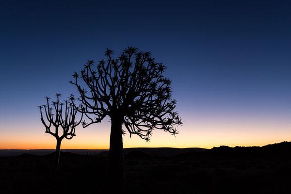 Namibia Memos 2017 - Köcherbaum :: Copyright Martin Schmidt, Fotograf für Schwarz-Weiß Fine-Art Architektur- und Landschaftsfotografie aus Nürnberg