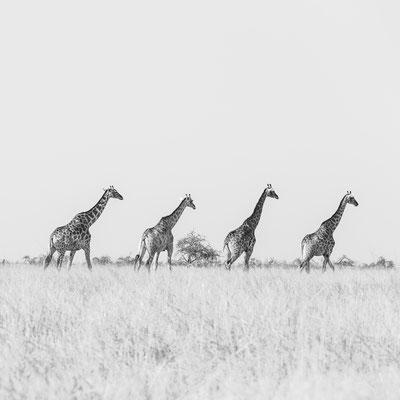 Namibia Memos 2017 - Erhabenheit :: Copyright Martin Schmidt, Fotograf für Schwarz-Weiß Fine-Art Architektur- und Landschaftsfotografie aus Nürnberg