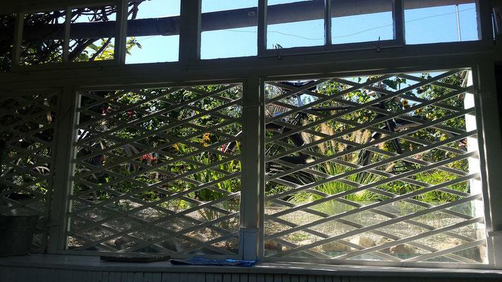 In Nachbars Garten entsteht eine kleine Prärie - In neighbours' garden a small prairie arises