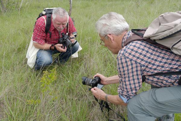Nach seiner Freilassung lockt der Bläuling Fotografen an ...