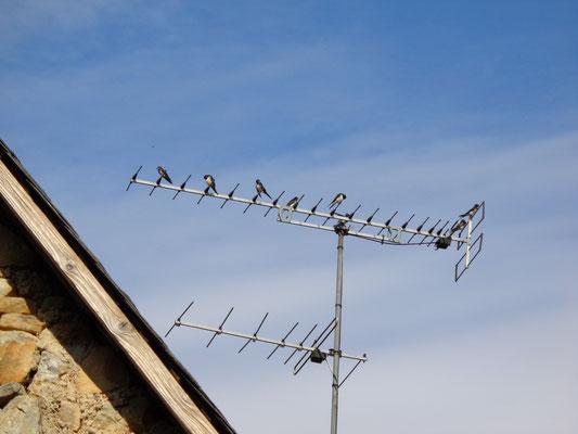 hirondelle rustique antenne tv
