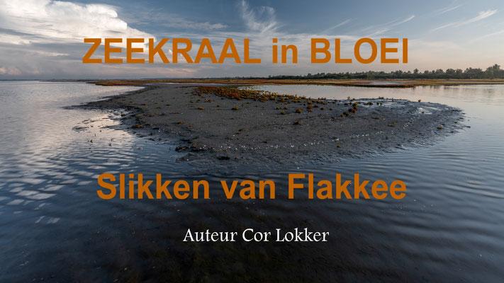 """'Zeekraal in Bloei"""" Cor Lokker, brons. Bloeiend zeekraal gefotografeerd op de Slikken van Flakkee. De zeekraal bloeit in de maanden september/oktober."""