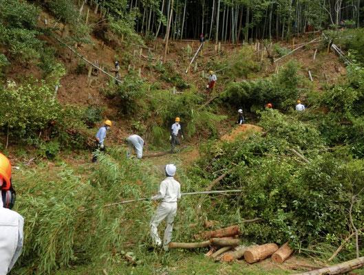 孟宗竹伐採の現場の様子
