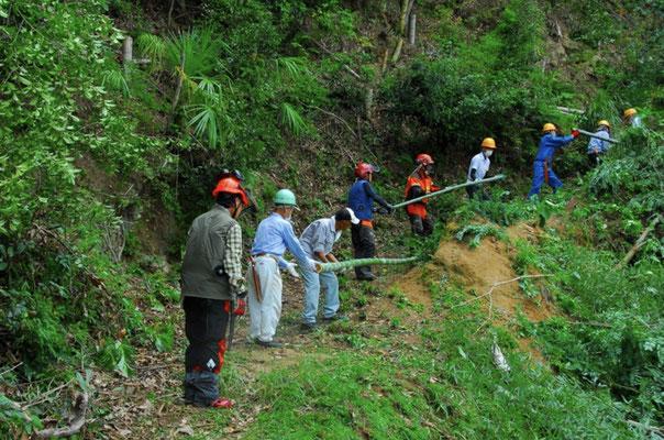 孟宗竹を伐採集積場への運搬の様子2
