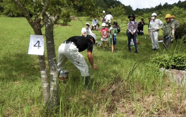 活力剤施用指導の様子 木の番号は孔の数を記す