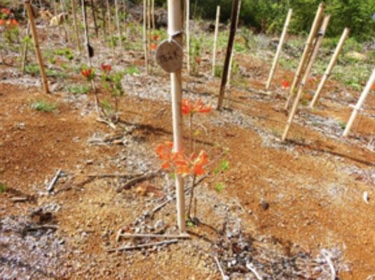 2020年植栽地の開花状況