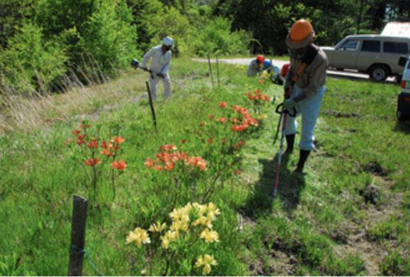 2016年植栽地の開花・草刈り状況