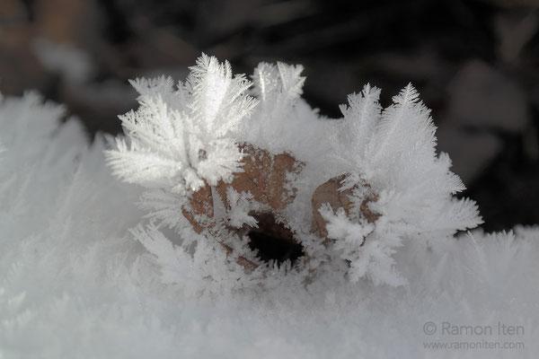 Eisblätter um Herbstlaub