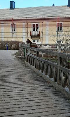 FPÖ_NK_2020-03-07_141923xk_Gfiederwarte