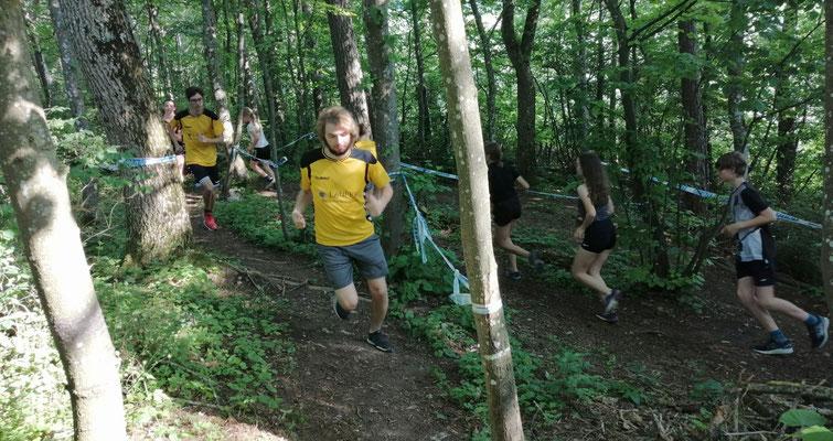 Trail Running durch unsere heimischen Wälder