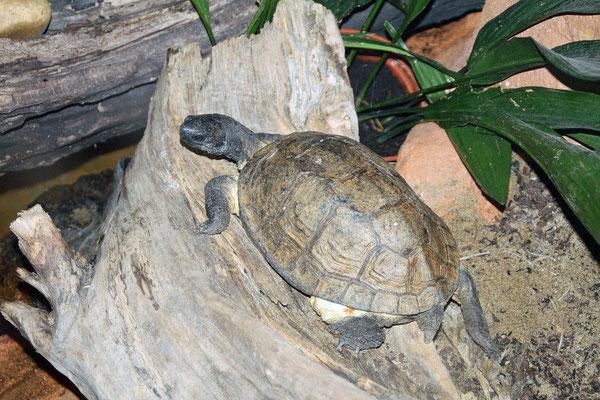 Tortoise at Dublin Zoo