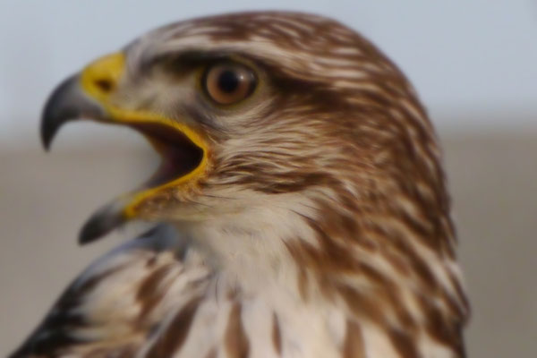 Here's Looking at you! Falconary 2015