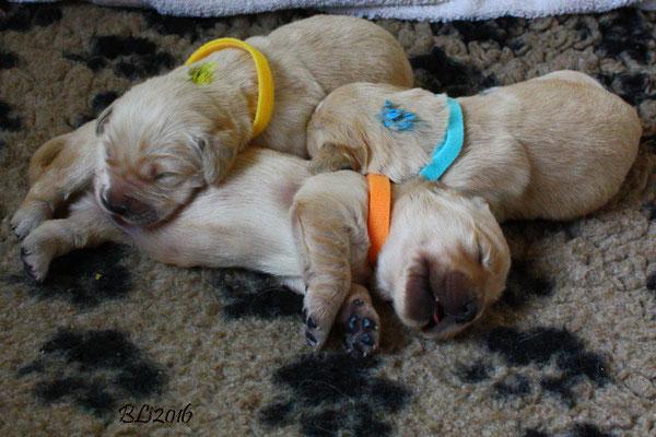 Herr Orange und die Damen Hellblau und Gelb, vereint im Schlaf