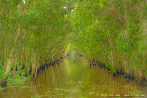 into the mangrove forest by Chau Doc