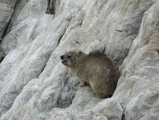 The area is also a home for rock hyraxes.