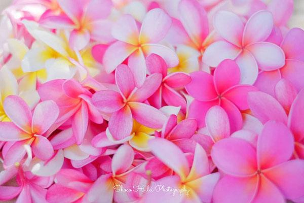 Hawaii-099