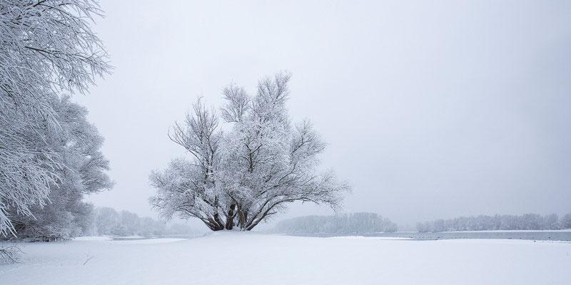 Rheinauen im Schnee