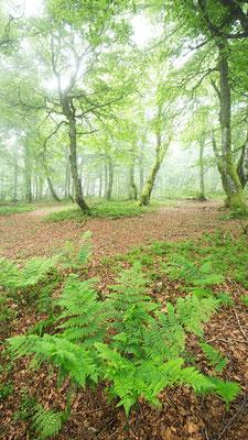 Farn & Wald