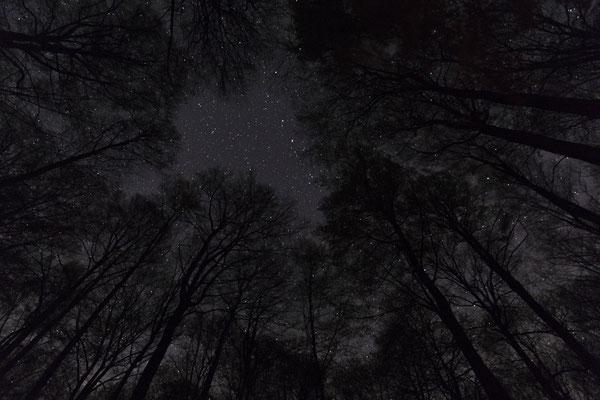 Baumkronen bei Nacht