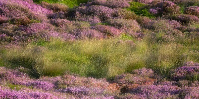 Heide und Gras