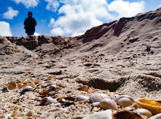 Muscheln aus der Froschperspektive mit Bokeh-Effekt