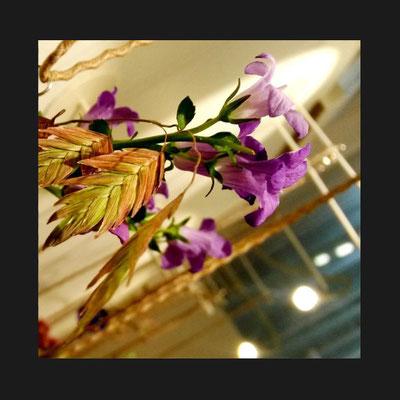 Collection Botanicus