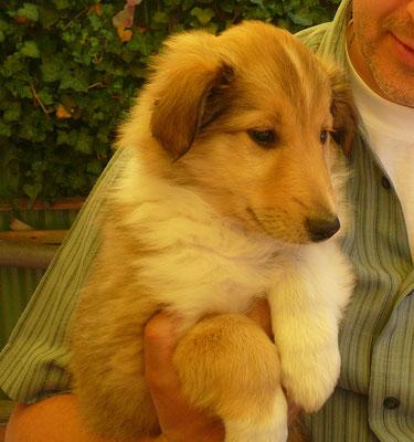 Brisco (Rusty) im Alter von 8 Wochen