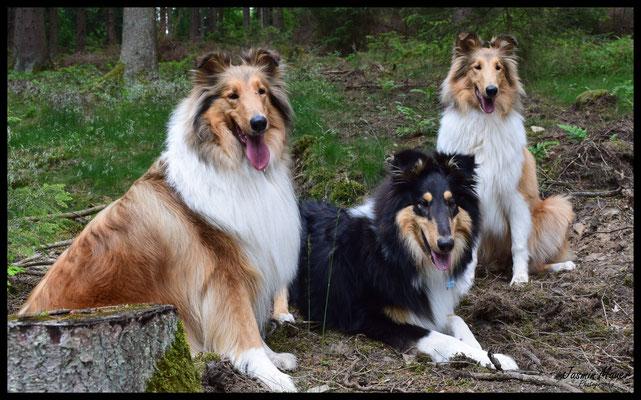 05. Juni 2017 - Treffen mit Cody, von links Luna, Cody und Cleo