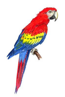 `Cartagena 2´, Vignette, erschienen bei Rio Grande Games