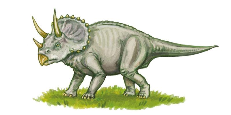 Triceratops aus `Dinosaurier: Ihr Aufstieg und Ende´, erschienen bei Jacoby & Stuart, 2010