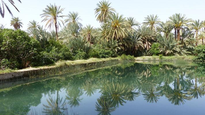 Un bassin de retenue et de décantation de l'eau d'irrigation