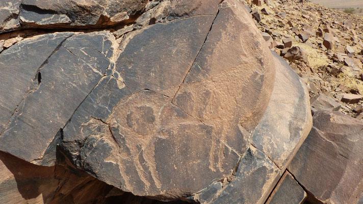 Gravure rupestre: un bouc (cornes, barbichette et sexe)