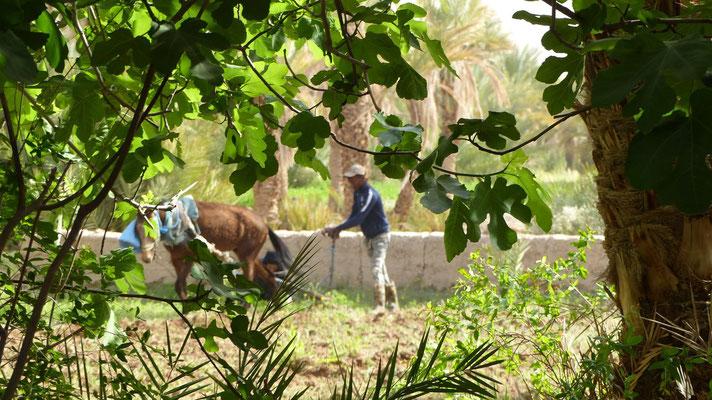 Un jeune homme laboure son jardin
