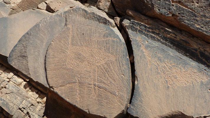 Gravure rupestre: 2 autruches (celle de gauche est bien visible)