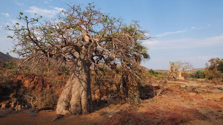 Chutes d'Epupa ; Namibie