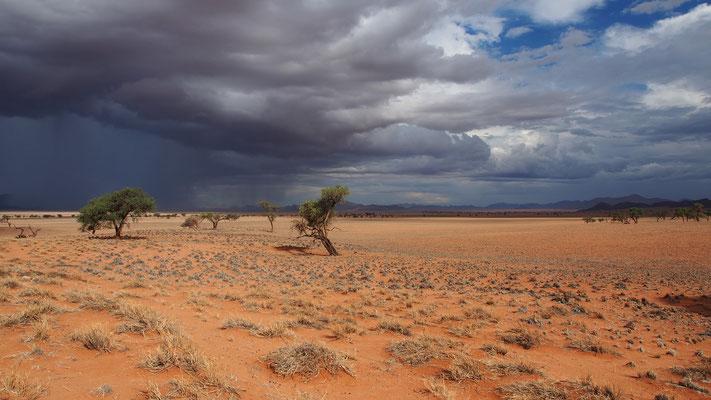 Réserve privée du Namibrand ; Namibie