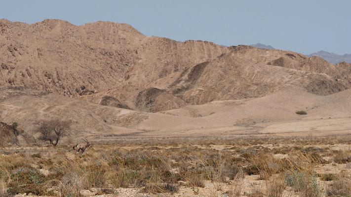 Oryx dans la vallée d'Obias ; Namibie