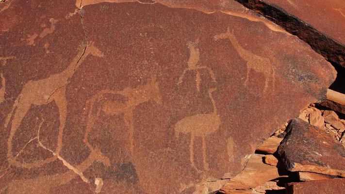 Gravures rupestres entre Ugab et Huab ; Damaraland ; Namibie