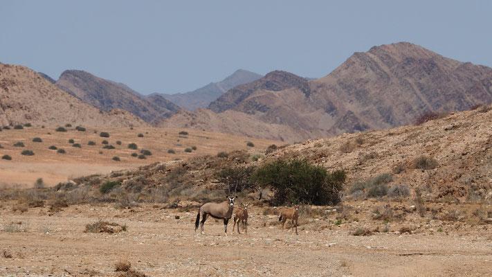 Oryx et ses petits dans la vallée d'Obias ; Namibie