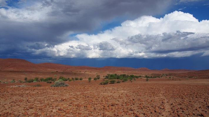 Concession de Palmwag ; Damaraland ; Namibie