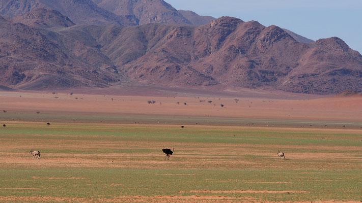 Sur la route entre Sesriem et Namibrand ; Namibie