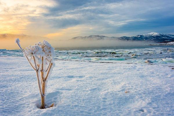 Arctic Flower [22 mm / f11 / ISO 400 / 1/160 Sek.]